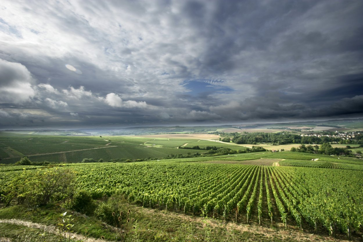 Vineyards of Chablis.