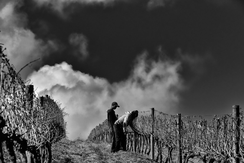 Vineyards in the Sondagskloof.