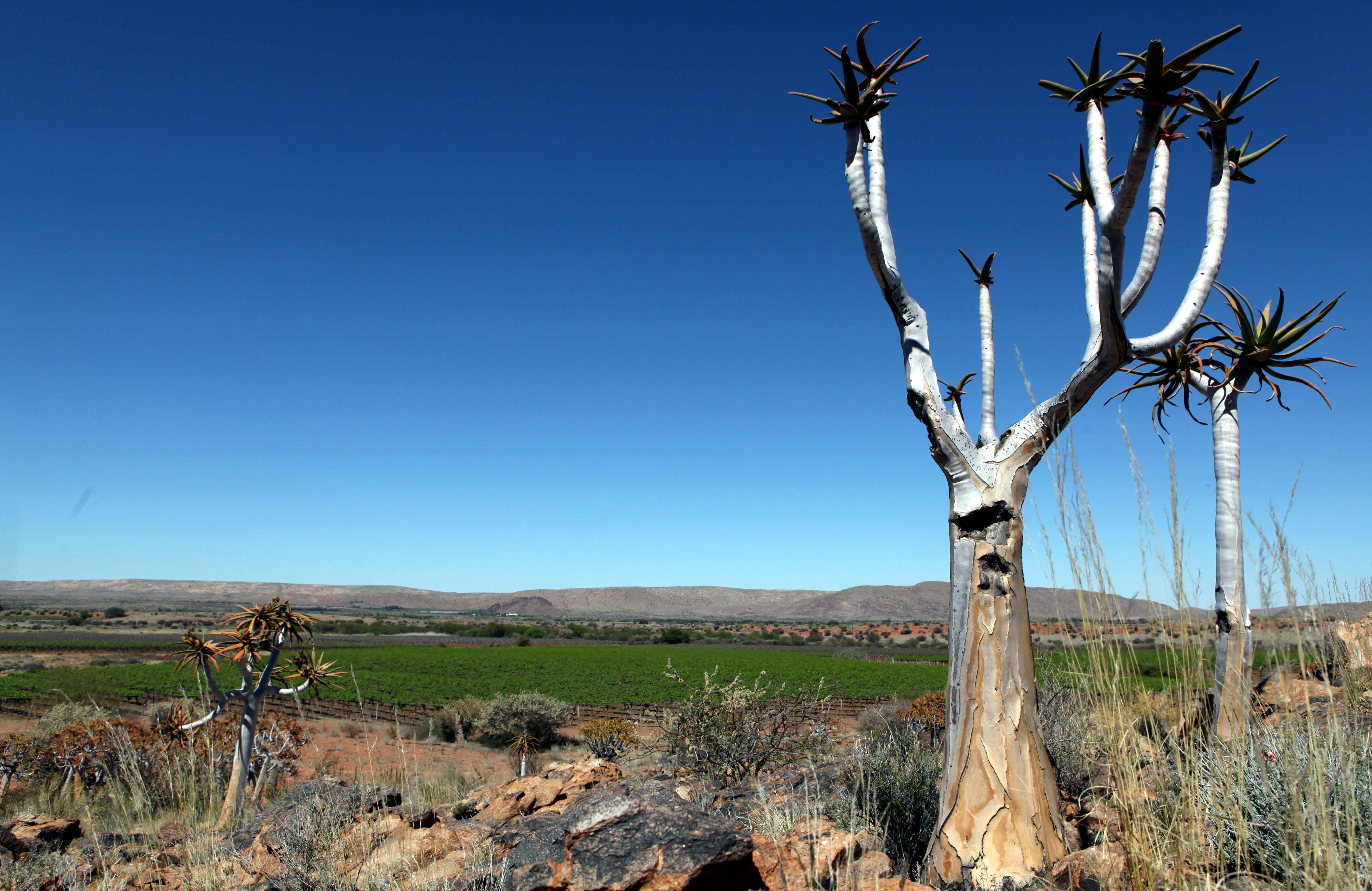Off the beaten track. Winelands of the Orange River.