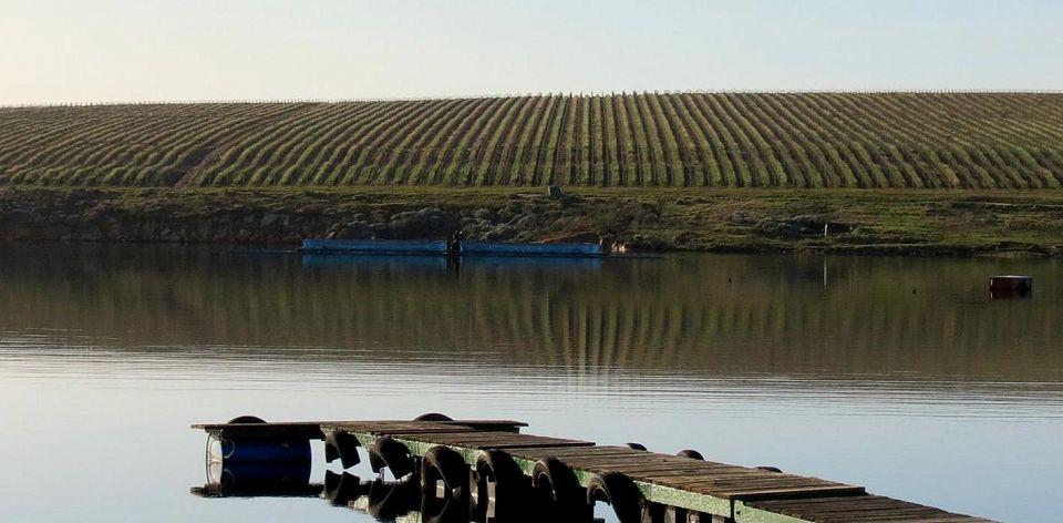Lomond. Dam in front. Vineyards at back.